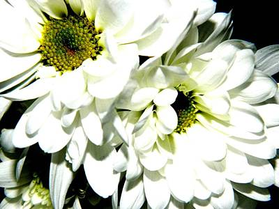Photograph - Flowers 3 by Jason Michael Roust