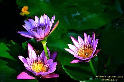 Photograph - Flowers 3 by Richard Zentner