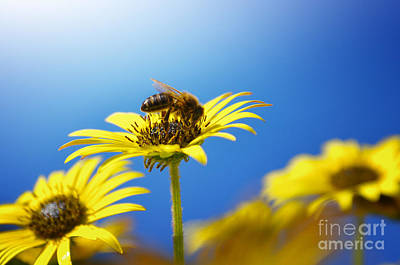 Background Photograph - Flowers And Bees by Carlos Caetano