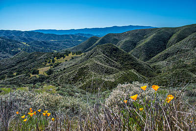 Photograph - Flowers And Mountains by Paul Johnson