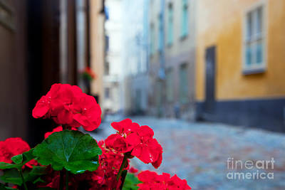 Photograph - Flowers And Old Buildings In Stockholm by Michal Bednarek