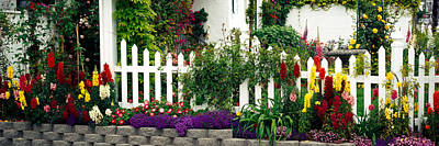 Flowers And Picket Fence In A Garden Art Print