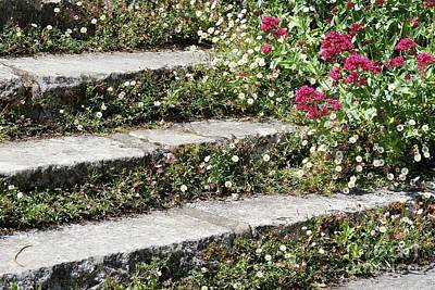 Photograph - Flowers And Steps by Wendy Wilton