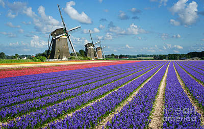 Landscape In Spring With Flowers And Windmills In Holland Art Print