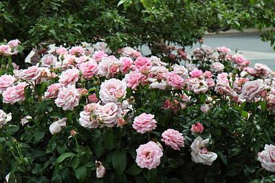 Cemetary Photograph - Flowers - Arlington National Cemetery - 01131 by DC Photographer