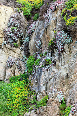 Of Big Sur Beach Photograph - Flowers As Cliff Hangers by Tom Norring
