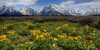 Photograph - Flowers At Mt Moran by Ken Smith
