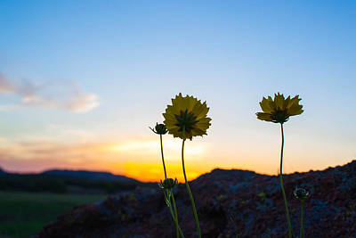 Photograph - Flowers At Sunset by Nathan Hillis