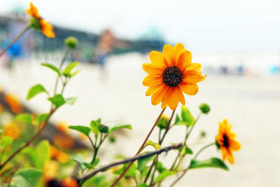 Photograph - Flowers At The Beach by Sennie Pierson
