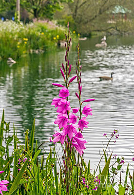Photograph - Flowers At The Lake by Kate Brown