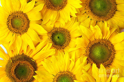Organic Photograph - Flowers Background by Michal Bednarek