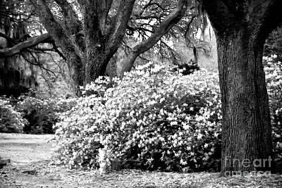 Photograph - Flowers Between The Oaks by John Rizzuto