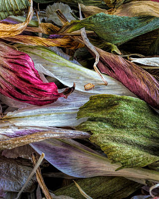 Abstract Flowers Photograph - Flowers by Bob Orsillo