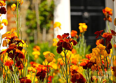 Photograph - Flowers By The Door by David Warrington