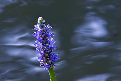 Photograph - Flowers By The Water by David Freuthal