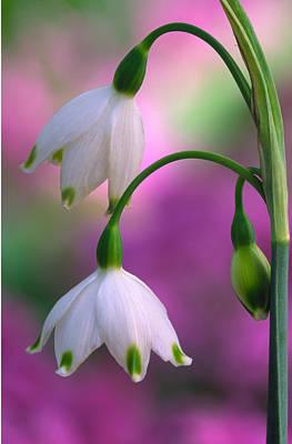 Photograph - Flowers by Byron Jorjorian