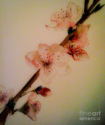 Painting - Flowers - Cherry Blossoms - Blooms by Jan Dappen