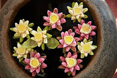 Flowers Floating In Pot, Okay 1 Villa Art Print