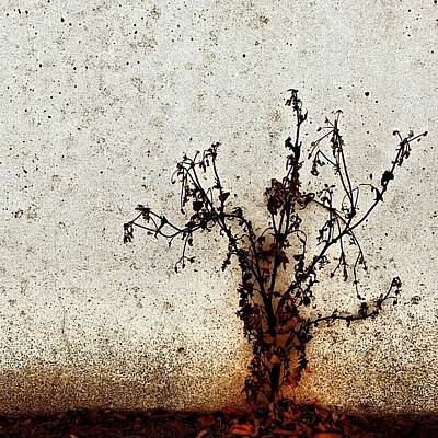 Botanical Photograph - The Brown Plant by Jason Michael Roust