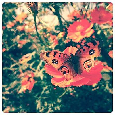 Botanical Photograph - #flowers #flower #tagsforlikes #petal by Raimond Klavins