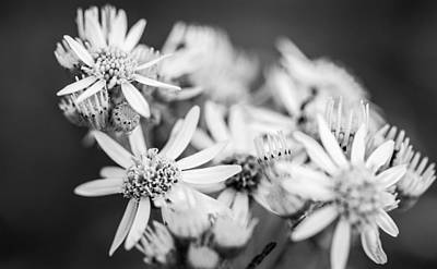 Photograph - Flowers by Gary Gillette