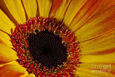 Photograph - Flowers by Gunnar Orn Arnason