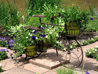 Two Wheeler Photograph - Flowers Home From The Market  by Paul Cannon