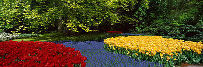 Tree Tulips Photograph - Flowers In A Garden, Keukenhof Gardens by Panoramic Images