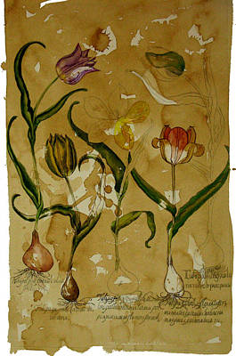 Flowers In Herbarium Art Print by Arual Jay