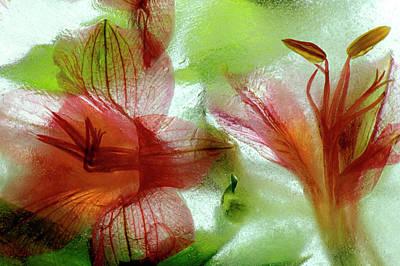 Flowers In Ice Credit Print by Jaynes Gallery