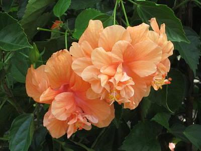 Photograph - Flowers In Peach by Good Taste Art