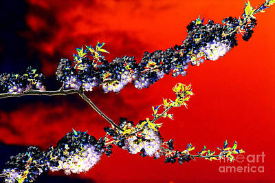 Abstract Flowers Royalty-Free and Rights-Managed Images - Flowers in red by Carol Lynch