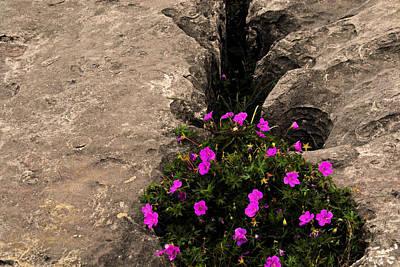 Flowers In Stone Art Print