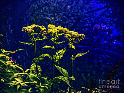 Photograph - Flowers In The Blue by Rick Bragan