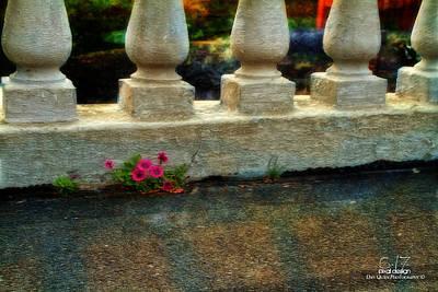 Flowers In The Cracks Art Print by Dan Quam