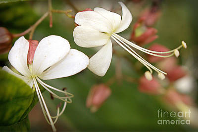 Photograph - Flowers In The Dancing Garden by Ella Kaye Dickey