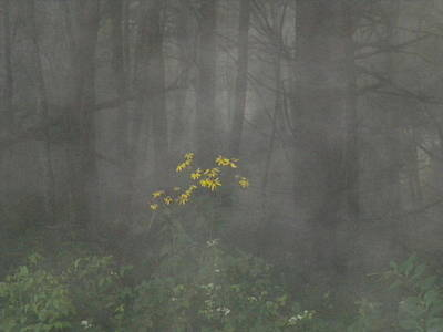 Photograph - Flowers In The Fog by Diannah Lynch