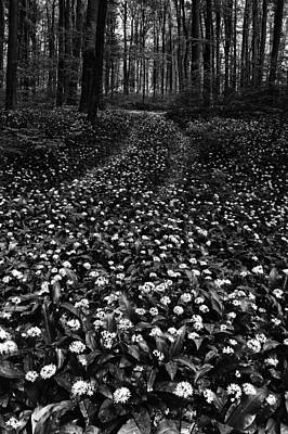 Photograph - Flowers in the forest by Ferenc Farago - Photograph Art