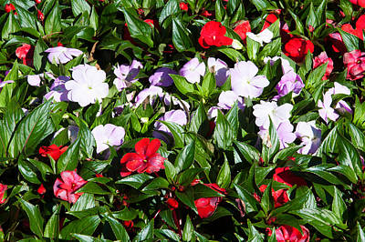 Flowers In The Garden At Villa Art Print by Panoramic Images
