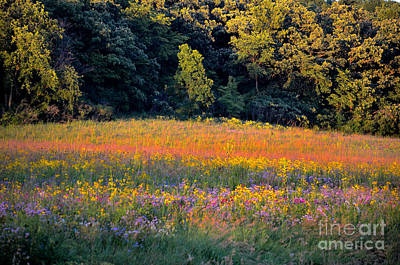 Flowers In The Meadow Art Print by Deb Halloran
