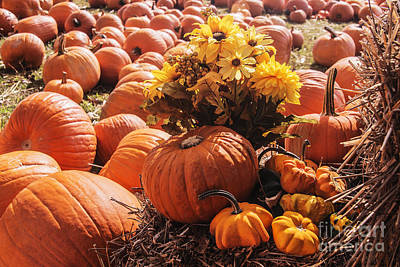 Photograph - Flowers In The Pumpkins by Elvis Vaughn