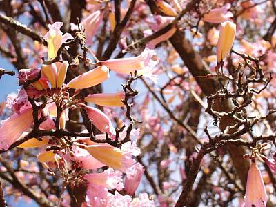 Photograph - Flowers In The Tree In Three Dimensions by Van Ness