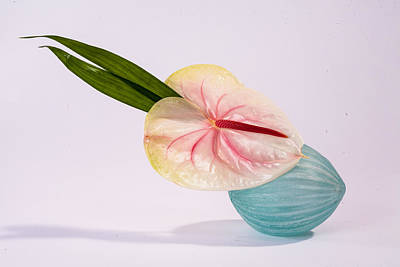 Photograph - Flowers In Vases 8 by Matthew Pace