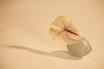 Photograph - Flowers In Vases1 by Matthew Pace