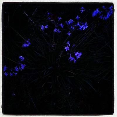 Purple Wall Art - Photograph - Flowers Like Stars by CML Brown