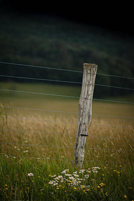 Canaan Valley Photograph - Flowers -n- Fences by Shane Holsclaw