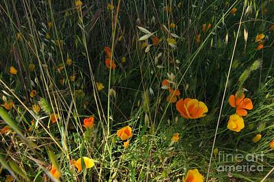 Photograph - Flowers Of Wild  by Tim Rice