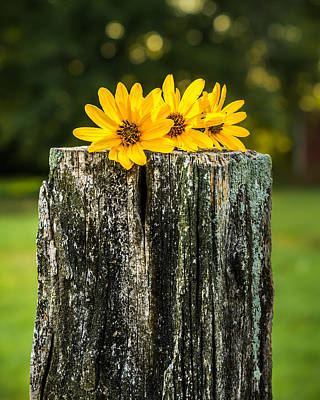 Photograph - Flowers On A Post by Ron Pate