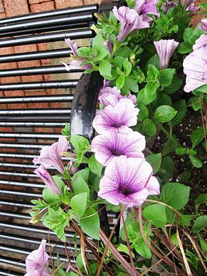 Planter Friend Photograph - Flowers On Bench by Will Boutin Photos