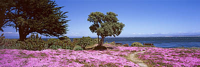 Flowers On The Beach, Pacific Grove Art Print by Panoramic Images